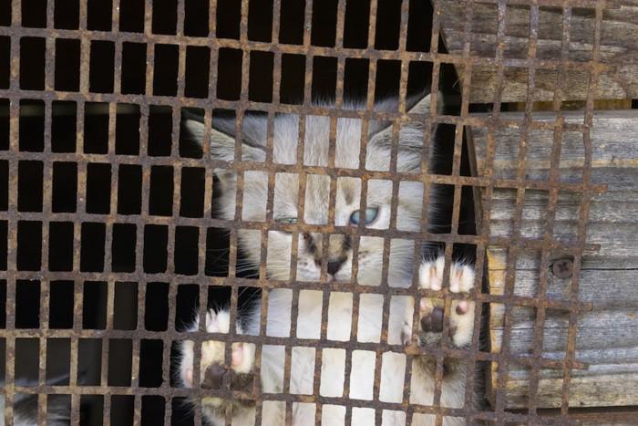 檻の中に閉じ込められた子猫
