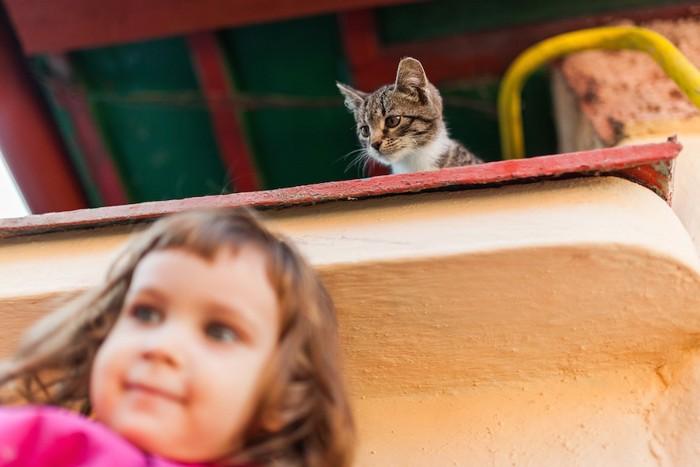 女の子を上から見る猫