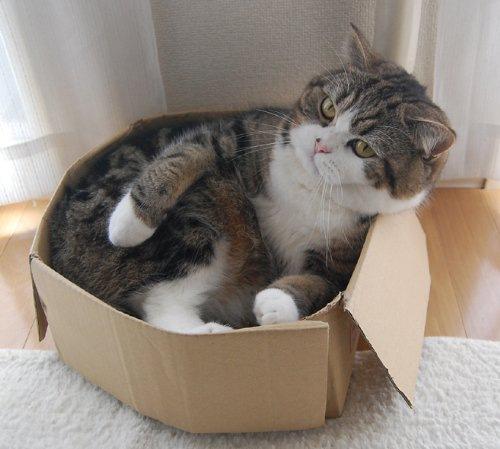 箱に入っている猫まる
