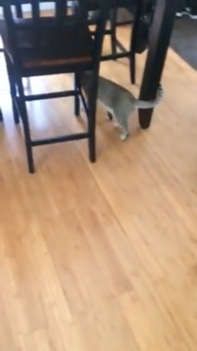変わった様子もなく歩く猫
