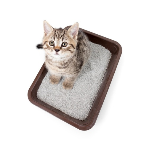 トイレの猫