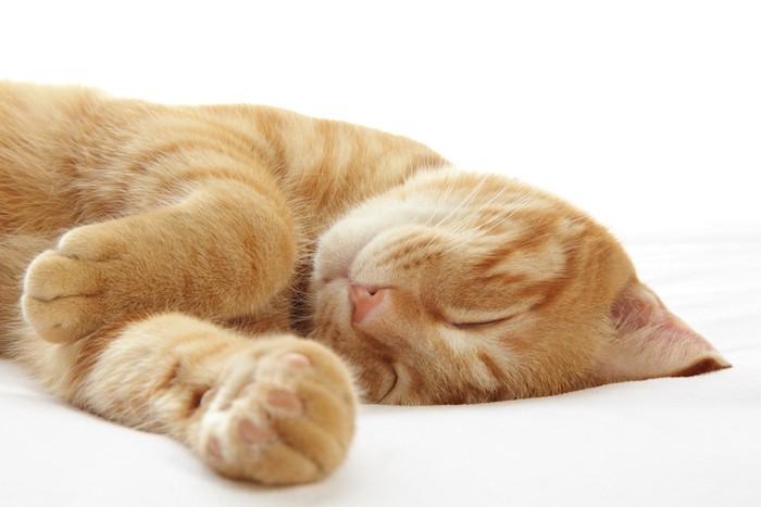 ぐっすりと眠る茶トラ猫