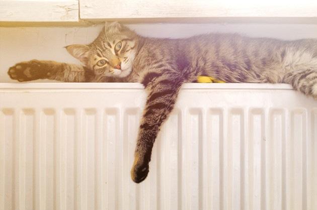 ヒーターの上で寝そべっている猫