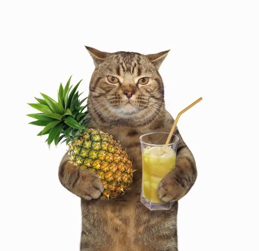 パイナップルジュースと猫