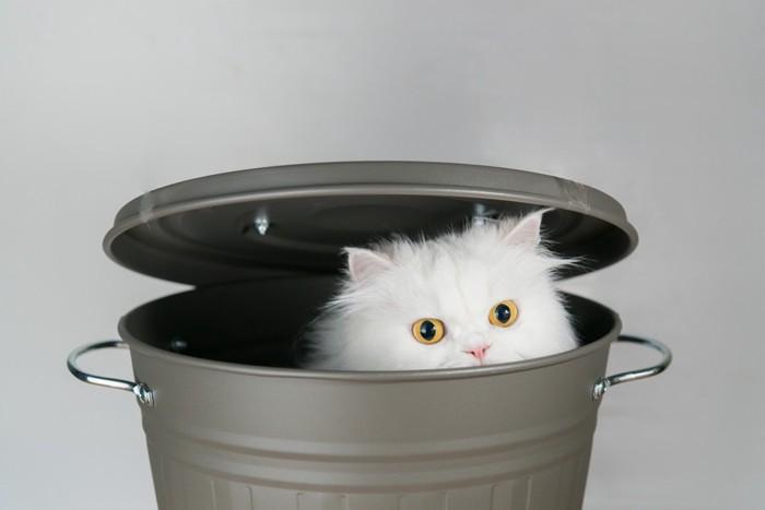 バケツの中に隠れる猫