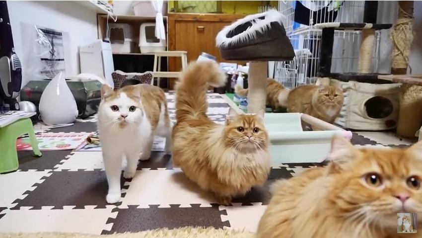 上を見つめる猫たち(4匹)