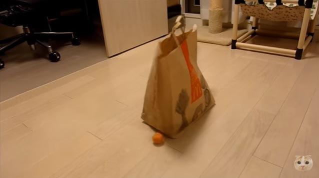 紙袋と黄色いボール