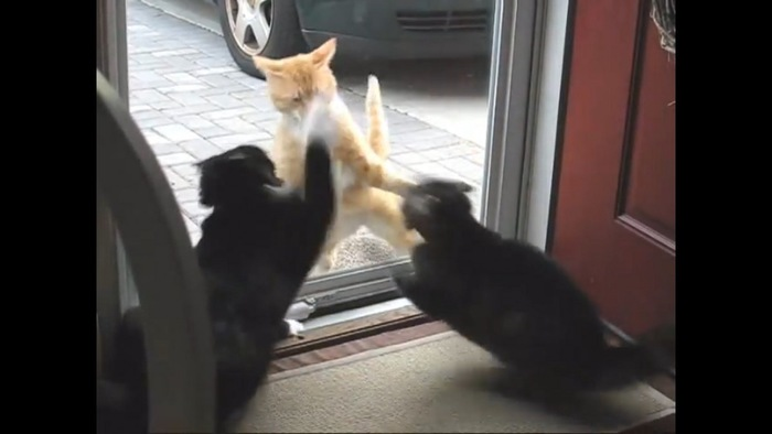 隣の猫も応戦
