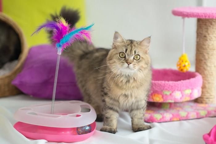 電動おもちゃとキャットタワーの間に立ってこちらを見ている猫
