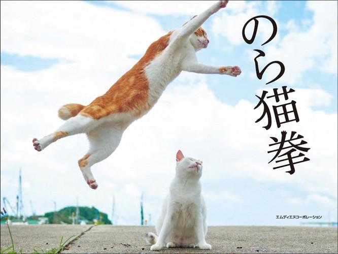 のら猫拳をしている猫