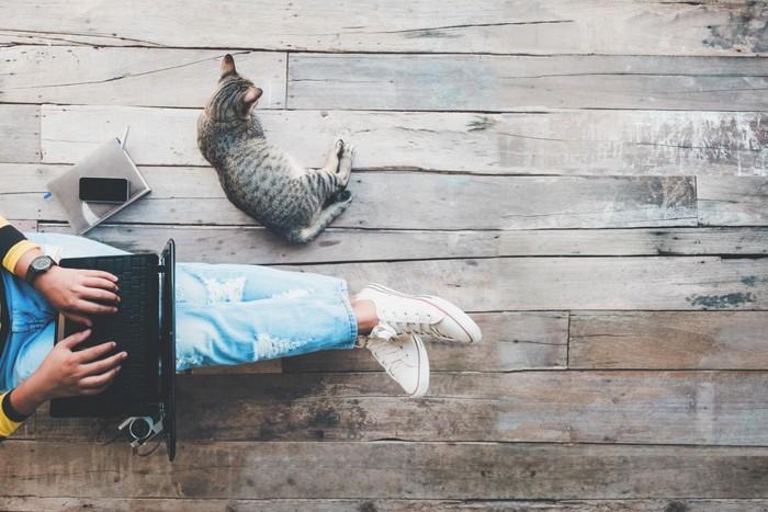 仕事中の飼い主のそばで寝る猫