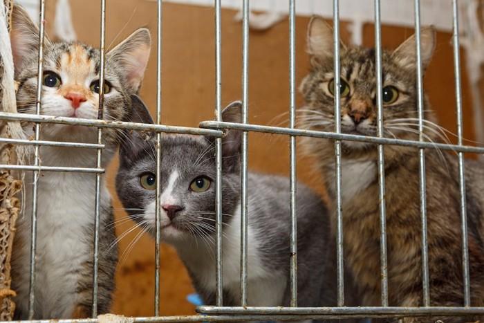 ケージの中に入った猫たち