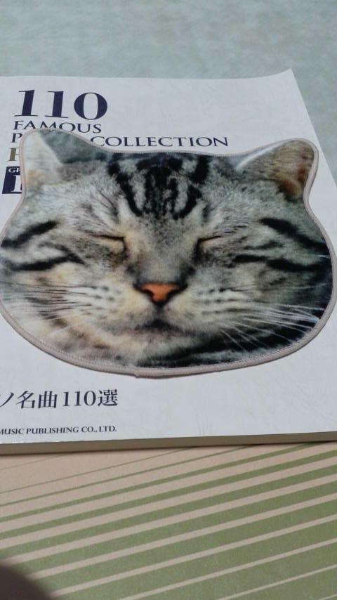 猫タオル正面