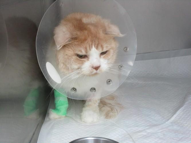 入院した猫の写真