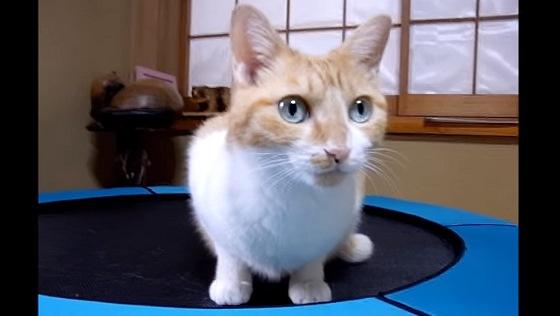 目を輝かせてこちらを見る猫
