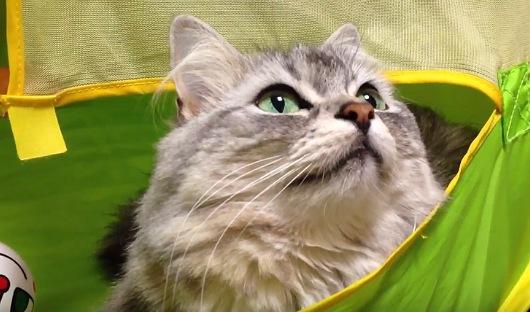 今度は違う方向を見つめる猫