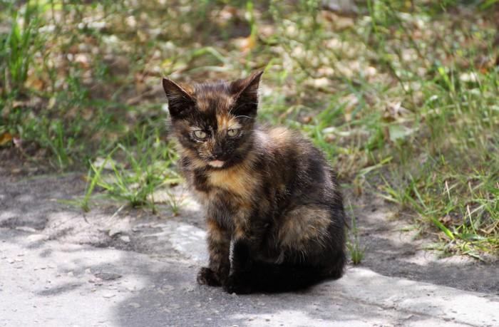 座っているサビ猫