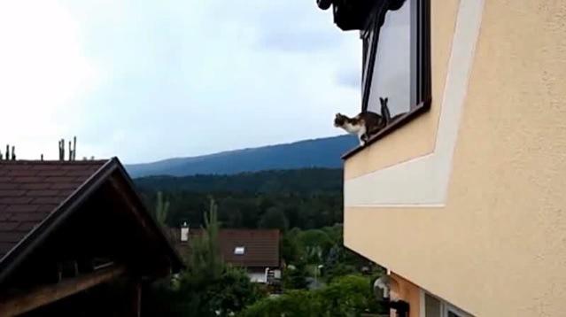 窓辺にしゃがむ猫