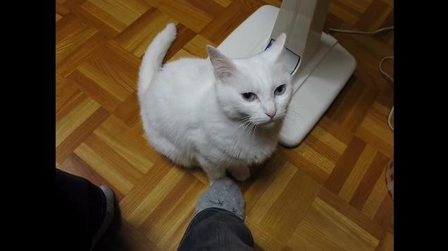 足を踏まれている猫