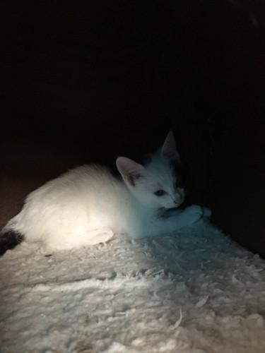 暗いところで一匹で眠る白黒ぶち