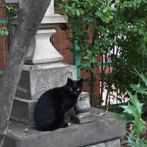 灯篭と黒猫