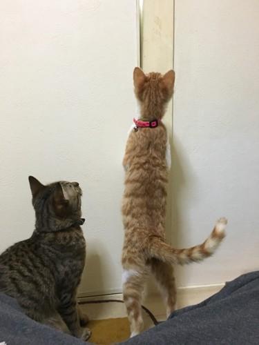 猫がよく鳴くときの理由 - nekochan.jp