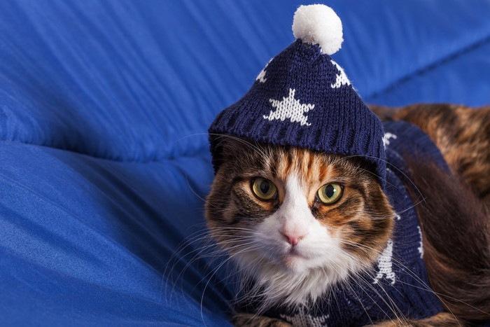 ナイトキャップの猫