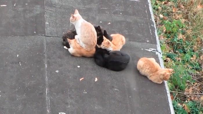 猫の上に座る猫
