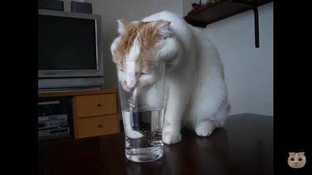 目を閉じて水を飲む猫