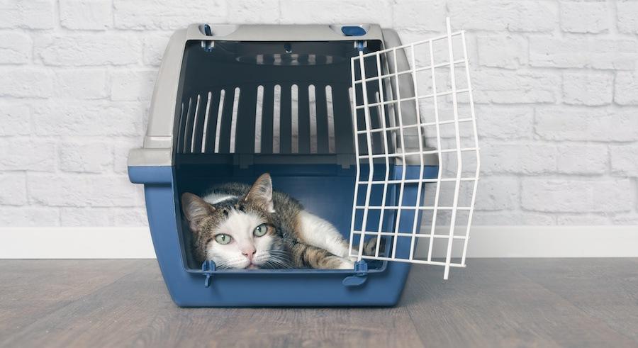 キャリーに入って横になる猫