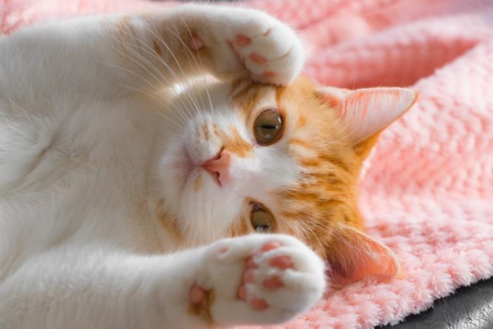 両手を見せるポーズの猫