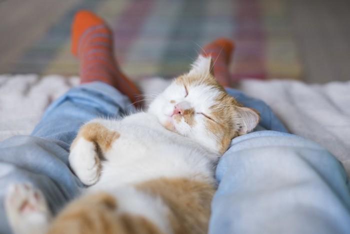 飼い主の足の上で眠る猫