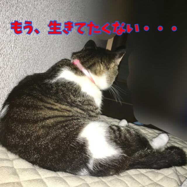 寂しさピークの猫
