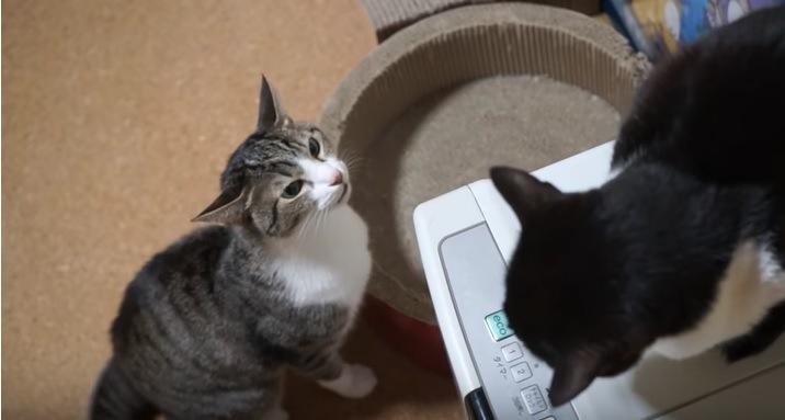 黒猫をにらみつけるキジ白