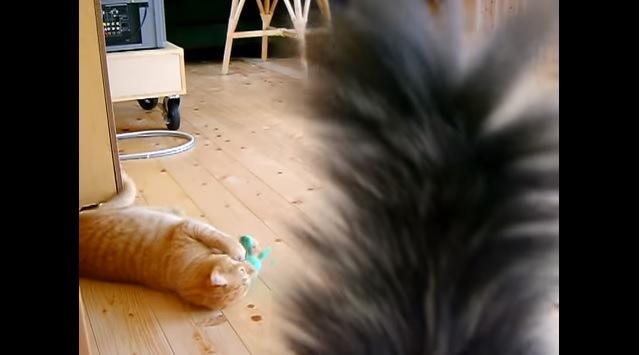 ぬいぐるみにじゃれつく猫