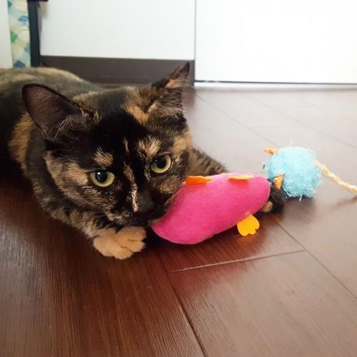 ピンクのぬいぐるみを抱く猫