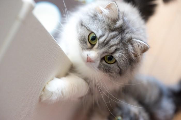 上目遣いの猫