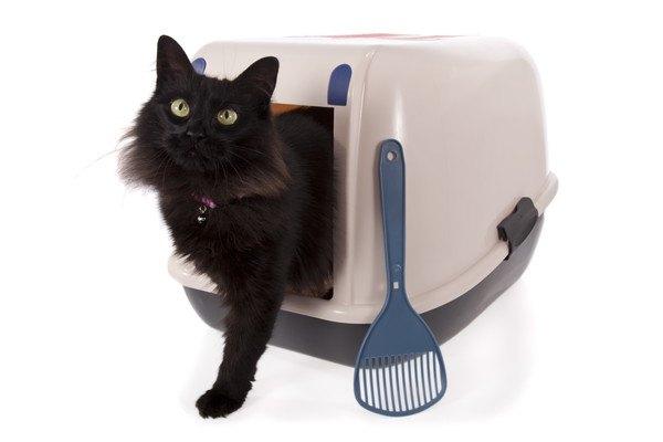 トイレから上半身を出す黒猫