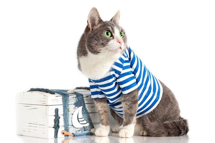 ボーダー柄の服を着た猫