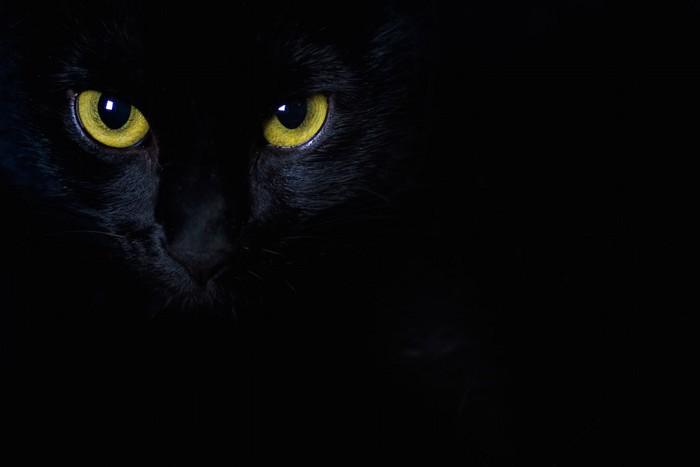 暗闇の中で瞳が光る黒猫