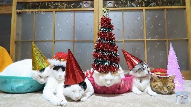 帽子を被り眠る猫たち