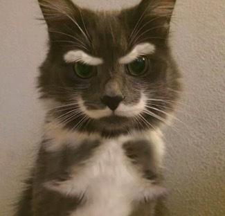 珍しい柄猫4