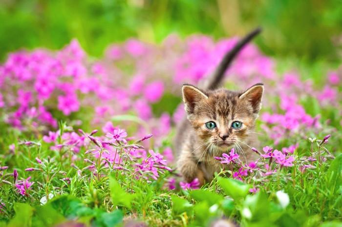 花畑を駆け回る子猫