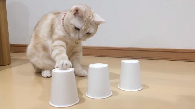 向かって左のコップに手を伸ばす猫