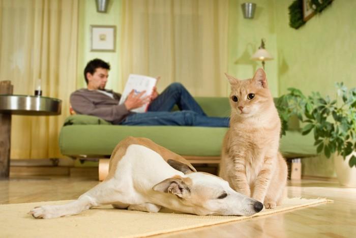 床でくつろぐ犬と猫とソファーで読書をする男性