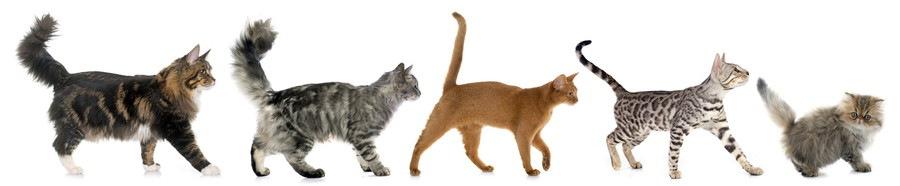 猫のしっぽの種類