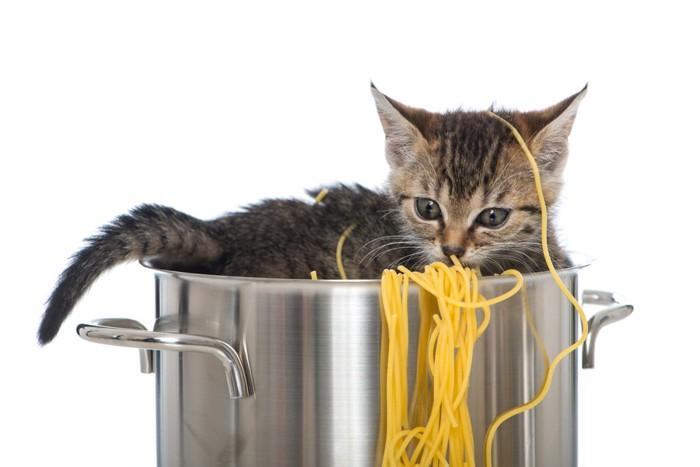 鍋のパスタと猫