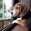犬がぼーっと外を眺…