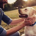 愛犬のためにしてい…