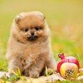犬にNGな『秋の食べ…